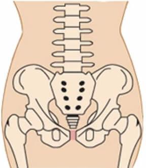 产前盆骨示意